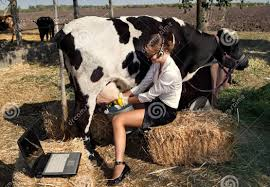 funny videos cow dance amazing youtube
