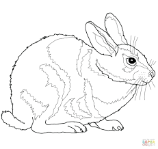 beagle coloring pages free click eastern cottontail rabbit dog