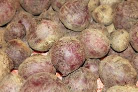 free images fruit food produce beetroot turnip flowering