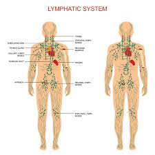 manual lymphatic drainage mld therapy now available at thame