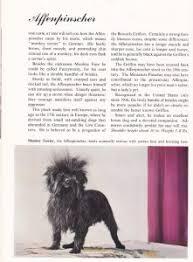 affenpinscher texas the affenpinscher u2013 a historical perspective canine chronicle