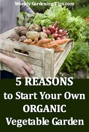 Starting An Organic Vegetable Garden by 5 Reasons To Start Your Own Organic Vegetable Garden U2022 Weekly