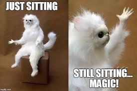Cat Sitting Meme - persian cat room guardian latest memes imgflip