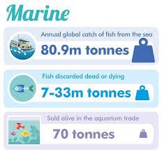 how does the marine aquarium trade ornamental aquatic trade