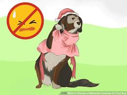 Ferret Costumes Halloween 3 Ways Choose Halloween Costume Dog Wikihow