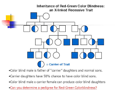 Can A Female Be Color Blind Applications Of Genetics Ppt Video Online Download