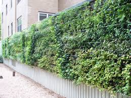 tidy vertical green wall garden with great combination of the wall