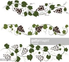 grape ornaments vector getty images