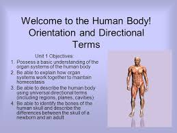 Directional Terms Human Anatomy Welcome To The Human Body Orientation And Directional Terms Unit