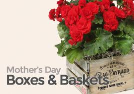 s day flowers delivery s day gift baskets delivery nyc plantshed