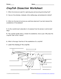 test mollusks and arthropods