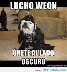 Memes De Star Wars - perro disfrazado de star wars memeando com