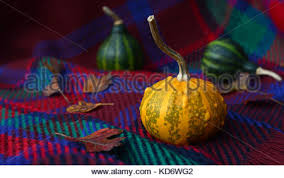 small green and yellow ornamental gourd growing on the vine stock