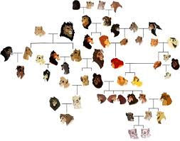 fanart tlk family tree