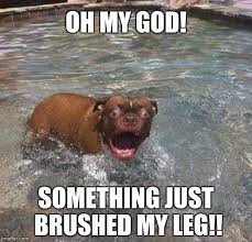 Funny Swimming Memes - image tagged in funny swimming animals dogs scared imgflip