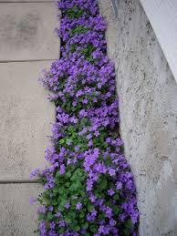 how to plant a small flower garden cori u0026matt garden