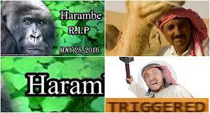 Arab Meme - arab triggered by holy gorilla infidel oc dankmemes