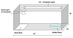 bearded dragon lighting guide bearded dragon care sheet swallow aquatics blog