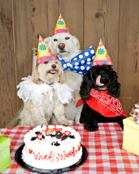 dog birthday party how to throw a party for pooches
