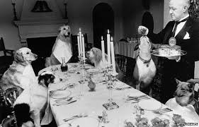 dogs at dinner table for cats and dogs pets pinterest dog dog cat and doggies