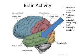 Anterior Association Area You Should Be Using Music With Your Patients With Brain Injury