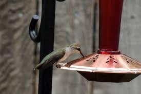 attracting hummingbirds backyard feeding watching wild bird co