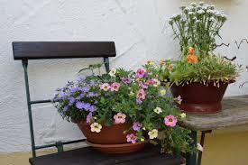 free picture flower vase flowerpot flora planter pot garden