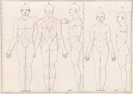 Female Body Anatomy Drawing 255 Best Draw Human Anatomy Body Proportions Images On Pinterest