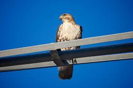 great backyard bird count birmingham zoobirmingham audubon