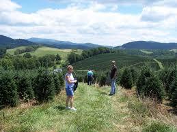 christmas tree fundraising options sell fraser fir trees buy