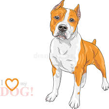 vector sketch dog american staffordshire terrier breed stock