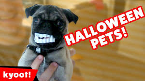 funniest cats u0026 dogs in halloween costumes weekly compilation 2016