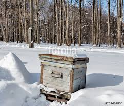 photos of snow beehive in the apiary in winter heavy frost a lot of snow russia