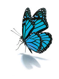 where did butterflies get their name