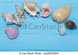 assorted seashells stock photo of assorted seashells on blue wooden background flat