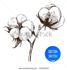 hand drawn cotton brunch vintage style stock vector 212820115