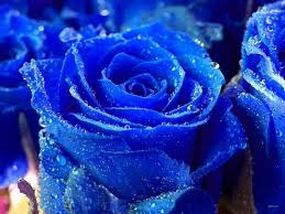 Flower Wallpaper For Desktop - beautiful blue roses and hearts free desktop wallpapers