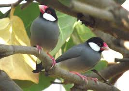 Hawaii Birds images Get up go out see birds the birds of everywhere but hawaii jpg