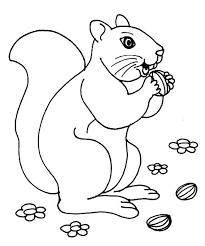 nut coloring page afficher l u0027image d u0027origine line art pinterest