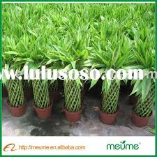 ornamental foliage ornamental foliage manufacturers in lulusoso