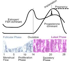 ferning pattern in spanish the menstrual cycle and ferning coincide when trying to conceive