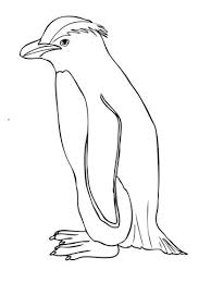 fiordland penguin coloring page free printable coloring pages