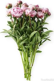 How To Take Care Of Flowers In A Vase Peony Flower Care Peony Season