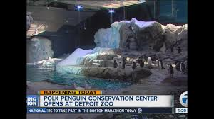 polk penguin conservation center opens at the detroit zoo today