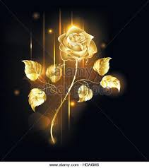 Golden Roses Golden Rose Stock Photos U0026 Golden Rose Stock Images Alamy