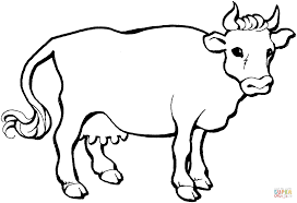 pics photos cow colouring pages color print coloring for kids