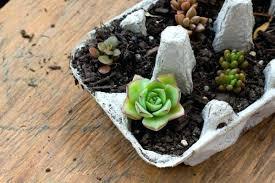 planter for succulents succulent planter ideas succulent garden ideas succulent planting