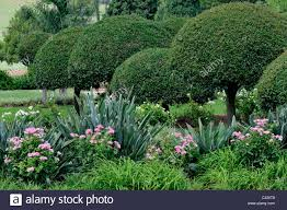 beautiful gardens by the pretoria union buildings in south africa