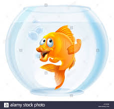 an illustration of a cute cartoon goldfish in a gold fish bowl