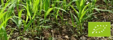 chambre agriculture 50 zoom sur l agriculture biologique en paca provence alpes côte d azur